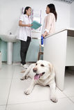 Woman with pet dog in veterinarian's office, discussing Royalty Free Stock Photos
