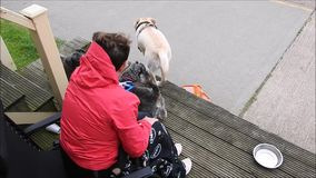 Woman with pet dogs on beach hut decking. Video of a woman surrounded by pet dogs whilst sitting on beach hut decking 30th may 2018 stock video footage