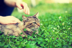 Woman pets cat Stock Photo