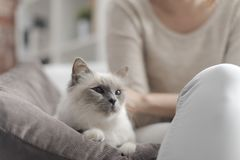 Woman petting her beautiful cat at home royalty free stock images