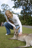 Woman petting kangaroo at Australia Zoo. A woman pets a kangaroo while on a trip to Australia Zoo on Australia's Sunshine Coast Royalty Free Stock Images