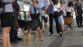 Young Woman Petting Police Security Dog at Subway Train Station Platform. 4K. Bangkok, Thailand - 04 DEC 2017. Woman Petting Police Security Dog at Subway Train stock video