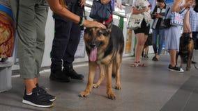 Young Woman Petting Police Security Dog at Subway Train Station Platform. 4K. Bangkok, Thailand - 04 DEC 2017. Woman Petting Police Security Dog at Subway Train stock video footage