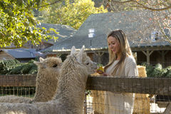 Woman at Petting Zoo Stock Photo