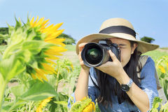 Woman Photographer. Taking pictures in a field of Sunflower Stock Photo