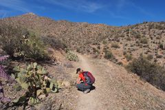 Woman photographing desert wildflowers in Saguaro National Park. royalty free stock photos