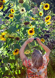 Woman Photographing Flowers Stock Photos