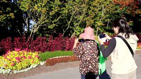 Woman photographing flowers using mobile phone. At park stock footage