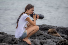 Woman photographing sea lion feel  hot weather Stock Images