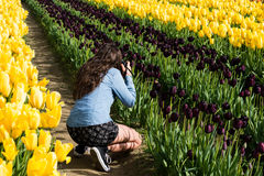 Woman photographing tulips Stock Photos