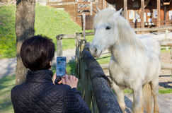 Woman Photographing a White Horse Behind a Wooden Fence Royalty Free Stock Photos