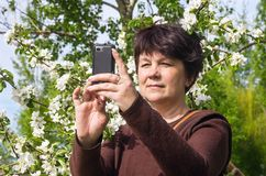 Woman photographs itself against blossoming apple royalty free stock photo