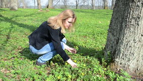 Woman pick forest flowers. Blond woman in jeans and jacket pick yellow forest flowers in early spring park stock video footage