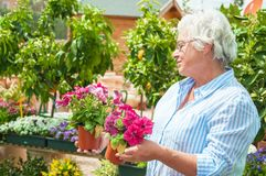 Woman pick out  potted flowers at garden center. Garden centre beautiful senior lady hold potted flowers Stock Photo