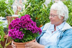 Woman pick out  potted flowers at garden center. Senior woman pick out potted beautiful flowers at garden center Royalty Free Stock Images