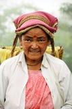 Woman pick tea leafs, Darjeeling, India royalty free stock images
