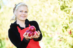 Woman picker portrait in apples orchard Stock Photos