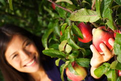 Woman picking apple from tree royalty free stock photo