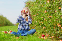 Woman picking apples in basket on farm Stock Images