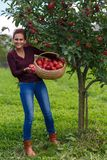 Woman picking apples in a basket Royalty Free Stock Photo