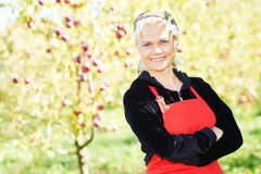 Woman picking apples in orchard Royalty Free Stock Image