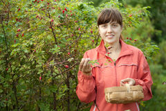 Woman picking brier. Young woman picking brier in the plant Royalty Free Stock Photo