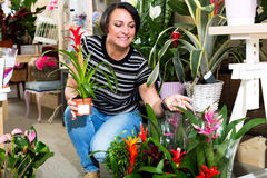 Woman picking a bromelia flower Stock Images