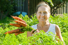 Woman  picking carrot in plant Royalty Free Stock Image