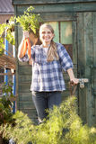 Woman picking carrots on allotment Royalty Free Stock Images