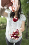 Woman picking cherries in the garden Royalty Free Stock Photography