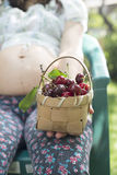 Woman picking cherries in the garden Stock Images