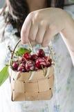 Woman picking cherries in the garden Stock Photo