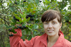 Woman picking chokeberry Royalty Free Stock Photo