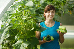 Woman picking cucumber Royalty Free Stock Images