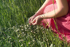 Woman picking daisies Royalty Free Stock Photo