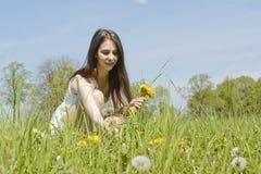 Woman picking dandelions Stock Image