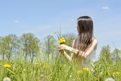 Woman picking dandelions Stock Photography