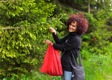 Woman picking fir buds Royalty Free Stock Image