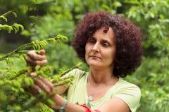 Woman picking fir buds Stock Photo