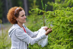 Woman picking fir buds Royalty Free Stock Photos