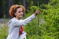Woman picking fir buds Stock Photography