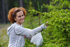 Woman picking fir buds Royalty Free Stock Image