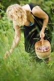 Woman picking herbal tea Stock Photo