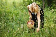 Woman picking herbal tea Stock Photos