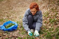 Woman picking nettle leaves Stock Images