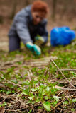 Woman picking nettle leaves. Farmer woman picking fresh nettle leaves with protection gloves Royalty Free Stock Image