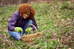 Woman picking nettles in a basket Stock Photo