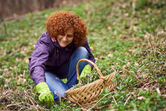 Woman picking nettles in a basket Stock Image