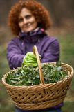 Woman picking nettles in a basket Royalty Free Stock Photography