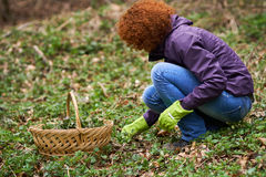 Woman picking nettles in a basket Royalty Free Stock Photo